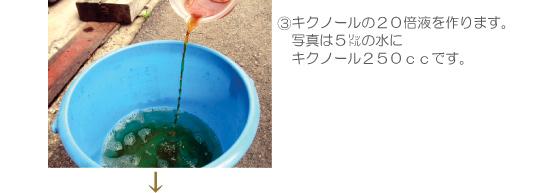 キクノールの20倍液を作ります