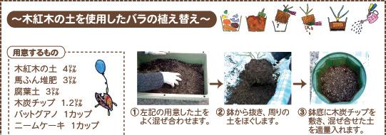 木紅木の土でバラの植え替え1