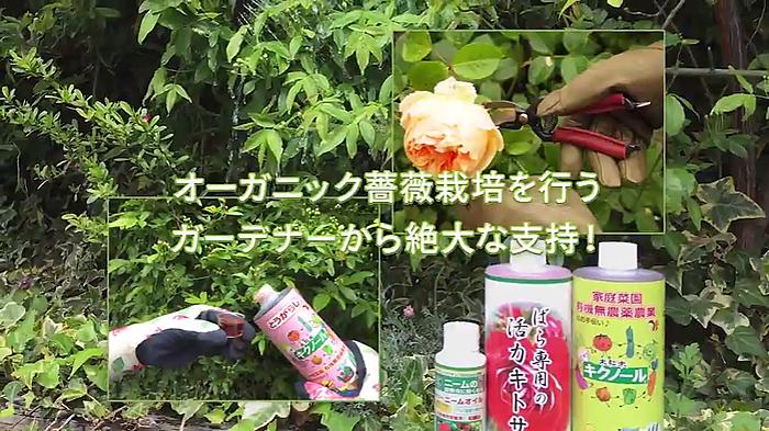 オーガニック薔薇栽培を行う ガーデニングから絶大な支持!